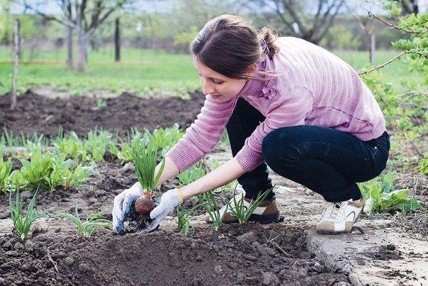 Народные приметы для садовод…