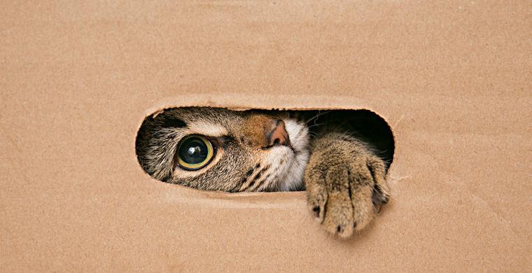 Ученые объяснили тягу котов к коробкам