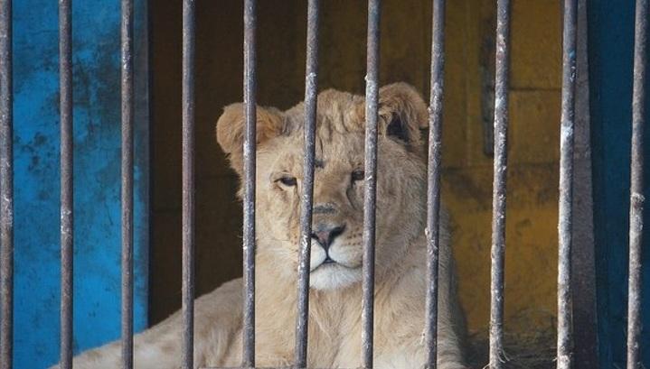 В Госдуме предложили ограничить деятельность передвижных зверинцев