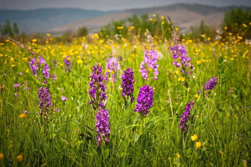 цветы на природе