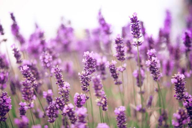9 ароматов, которые помогут снять стресс и расслабиться
