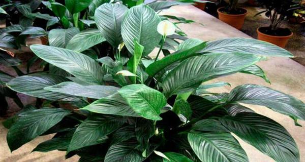 Возможно, у вас дома есть одно из этих 12 растений, которые являются сокровищем, о котором вы не знали