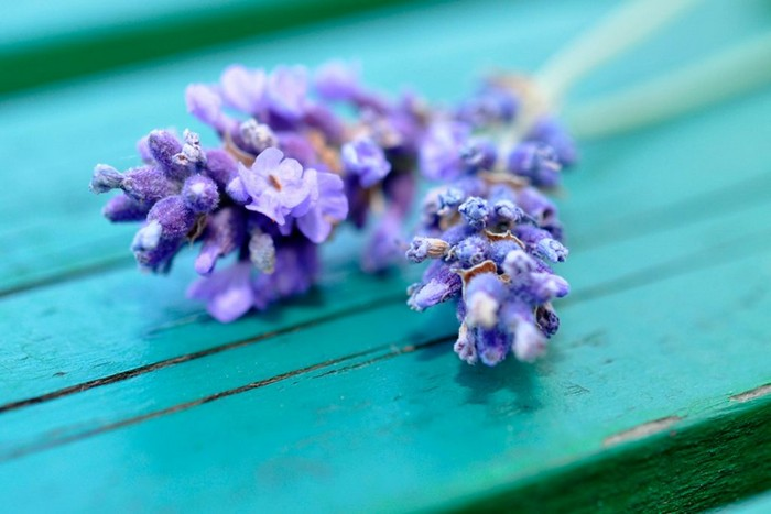 8 растений, которые точно отпугнут комаров от вашего дома и дачи