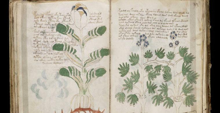 Искусственный интеллект взломал «код» манускрипта Войнича