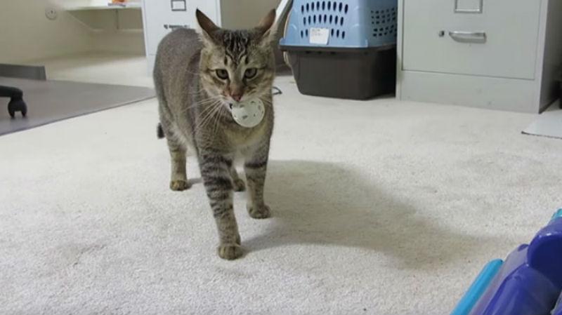 Изобретена машина для кормления кошек, которая вынуждает животное выйти на охоту