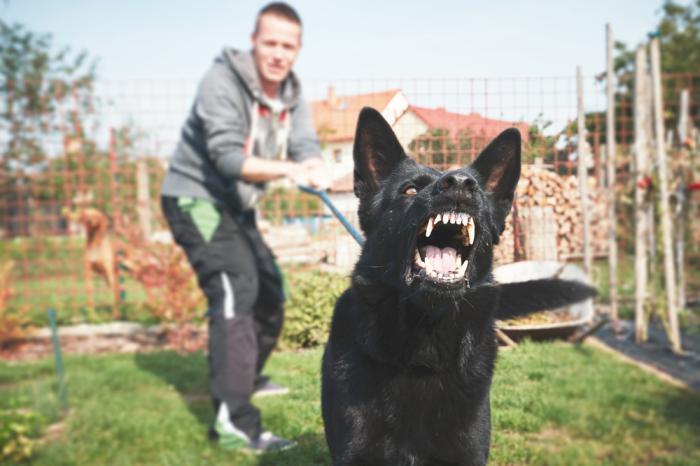 Почему на одних людей собака…