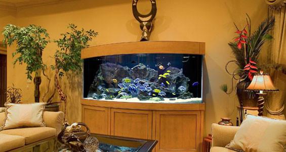Необычные аквариумы для дома