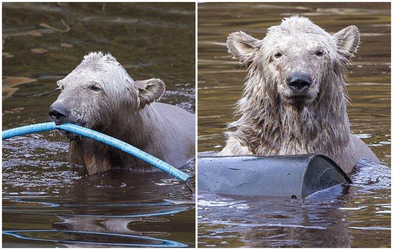 Медвежье счастье: как развле…