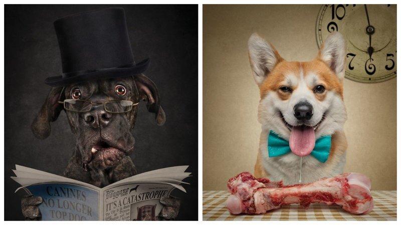 Фотопортреты собак и кошек, …