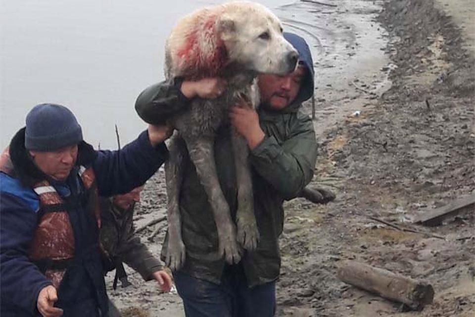 В Тобольске неизвестные изрешетили собаку и бросили её в воду