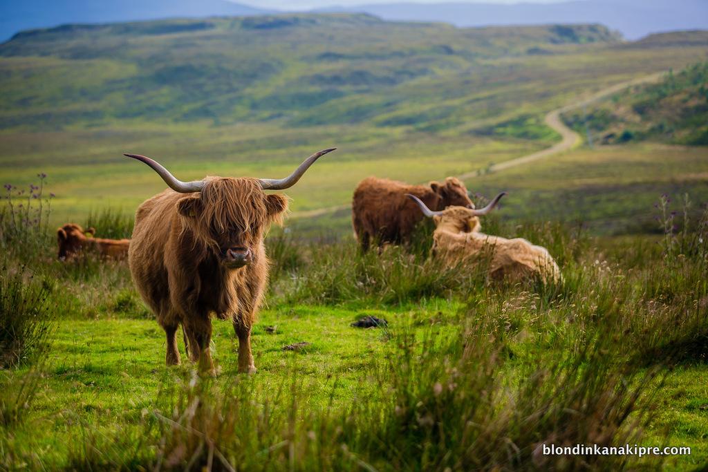 Наша поездка в Шотландию