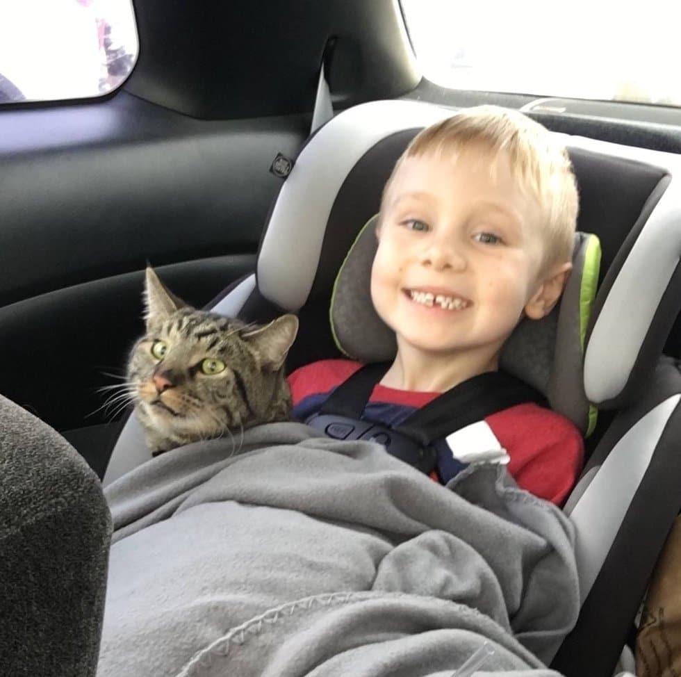 Так могут любить только дети! 4-летний мальчик попросил у Санты подарок для котов, потерявшихся при пожаре…
