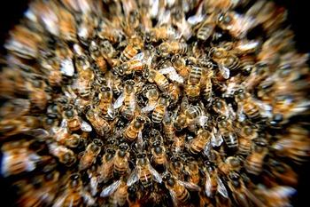 В США неизвестные уничтожили у пчеловода почти всех российских пчел
