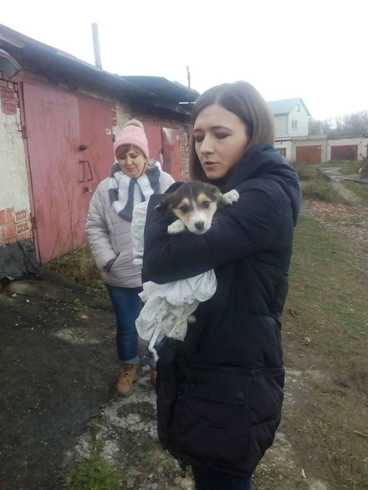Дина была вынуждена питаться сырым картофелем! Уличную собачонку закрыли в гараже на неделю
