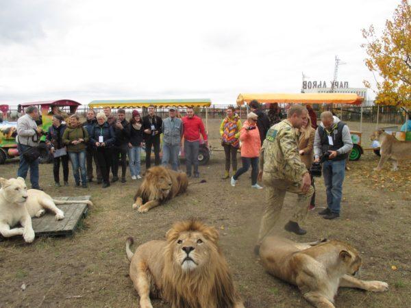 Прогулка со львами в сафари-парке Тайган