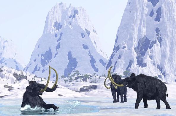 Палеонтологи обнаружили невезучих холостяков среди мамонтов