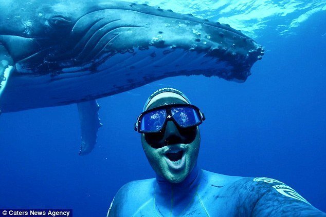 Дайвер снял зрелищное видео-селфи с горбатым китом