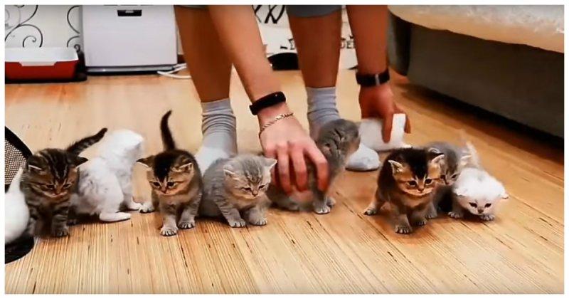 Попытка усадить перед камерой 10 котят