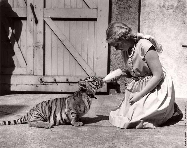 Как звери XIX века с людьми дружили