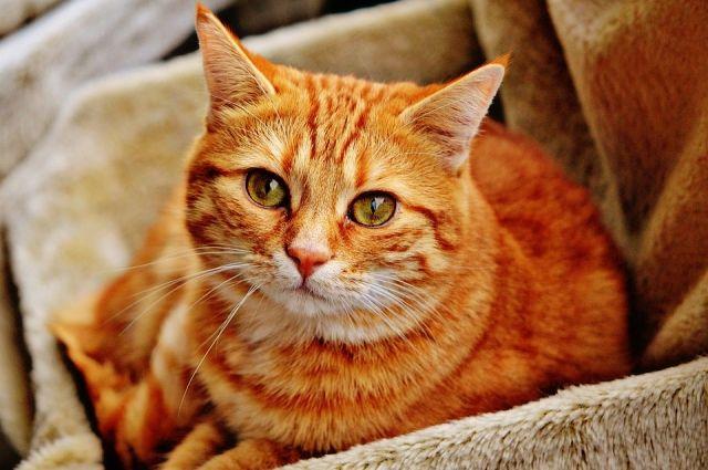 СМИ: в Италии кот получил в наследство 30 тысяч евро