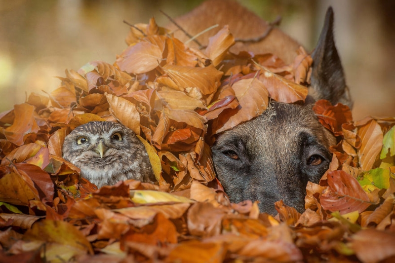 30 фото о том, что дружба бывает даже между совами и собаками