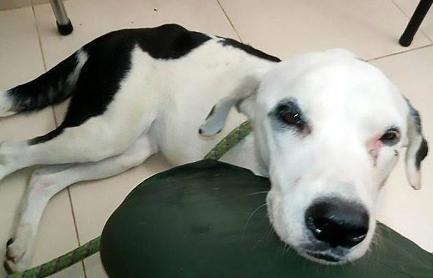 Собака умерла из-за 'разбитого сердца' после того, как владелец бросил её в аэропорту