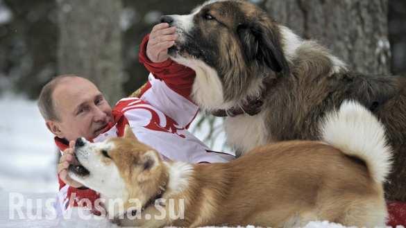 Календарь к 2018 году - Путин и собаки)