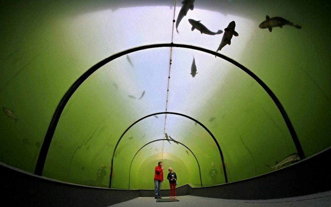 Необычный туннель под озером в Чехии