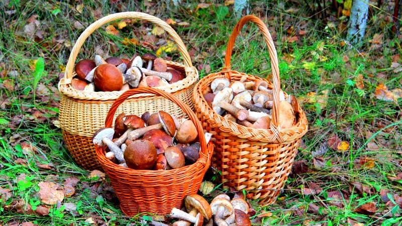 Как заморозить грибы на зиму - 4 способа