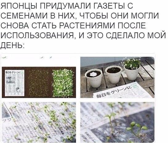 Газеты с семенами