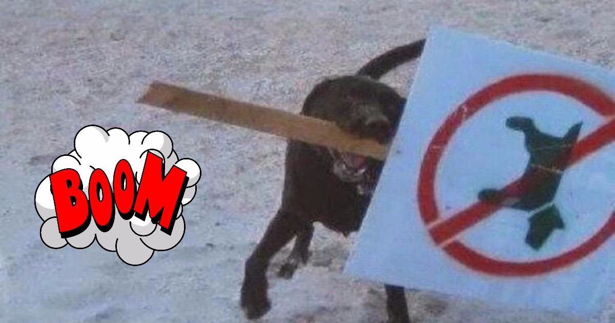 Настоящие бунтари! Животные, которым плевать на придуманные людьми правила! :)