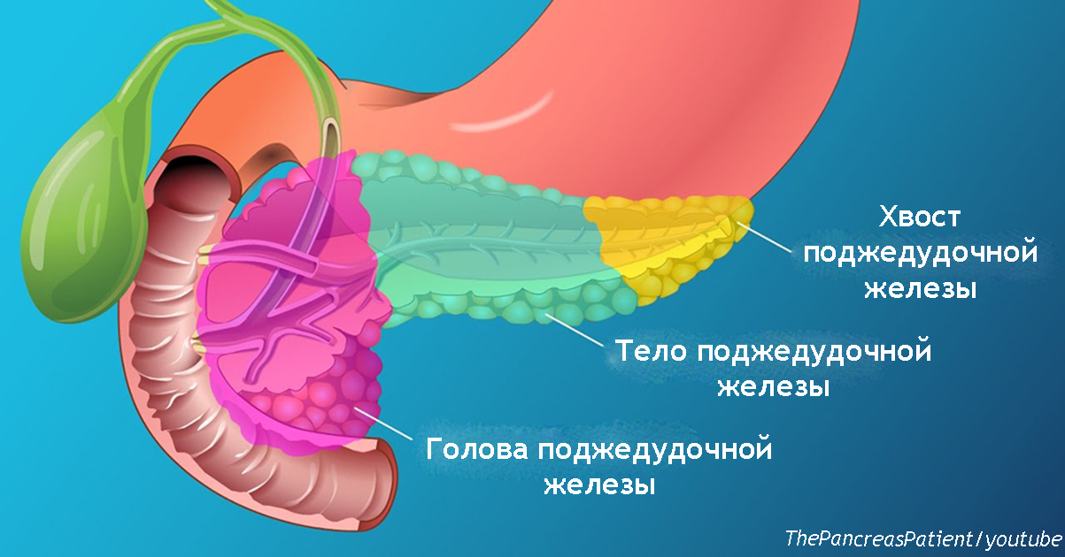 Поджелудочная — жизненно важный орган, но симптомы её болезни 90% из нас игнорируют