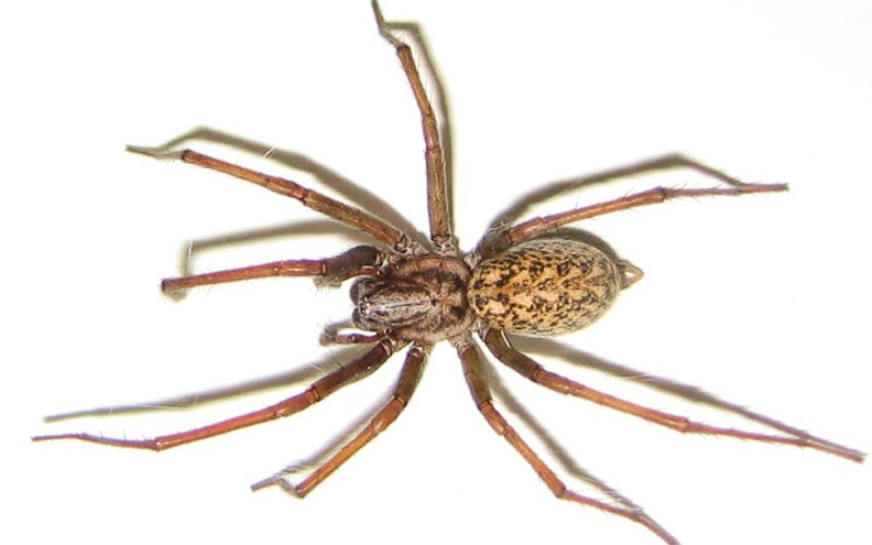 10 пауков, которых действительно стоит бояться