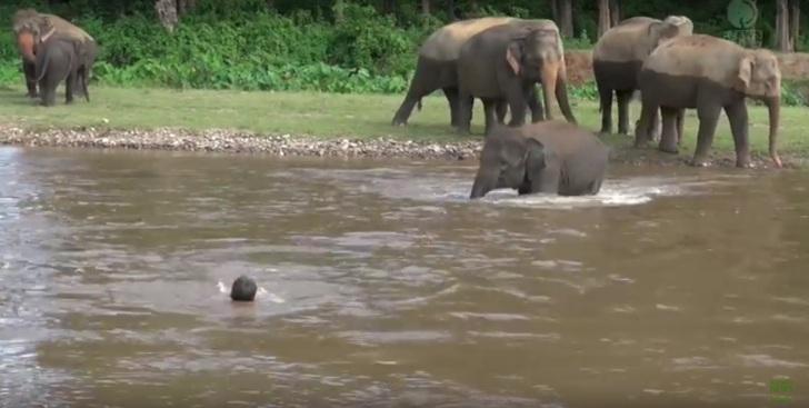 Слон со всех ног спешит к ут…