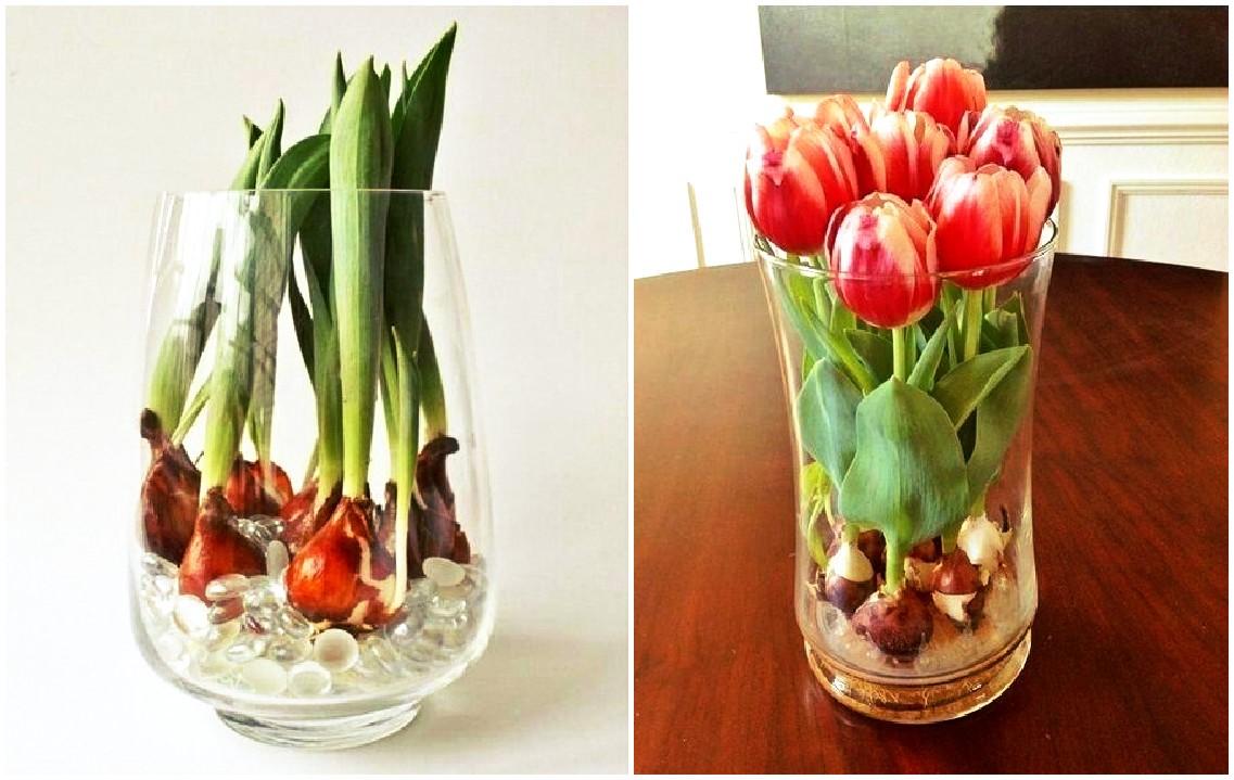 Картинки по запросу тюльпаны на балконе