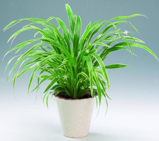 Комнатные растения, отлично …