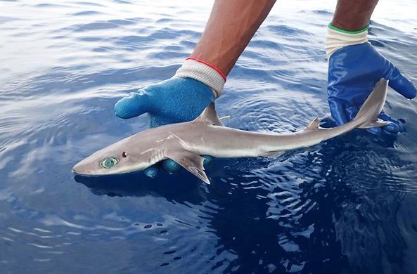 Во Флориде нашли акулу, которая выглядит как персонаж аниме