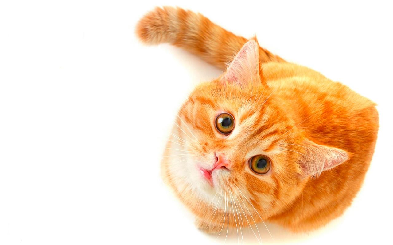 Кошка,просто кошка!