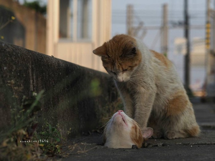 Japanese Photographer Captures Stray Cats Turning The Streets Into Their Playground