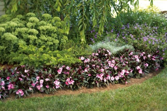 Цветник из декоративных растений с разным периодом цветения
