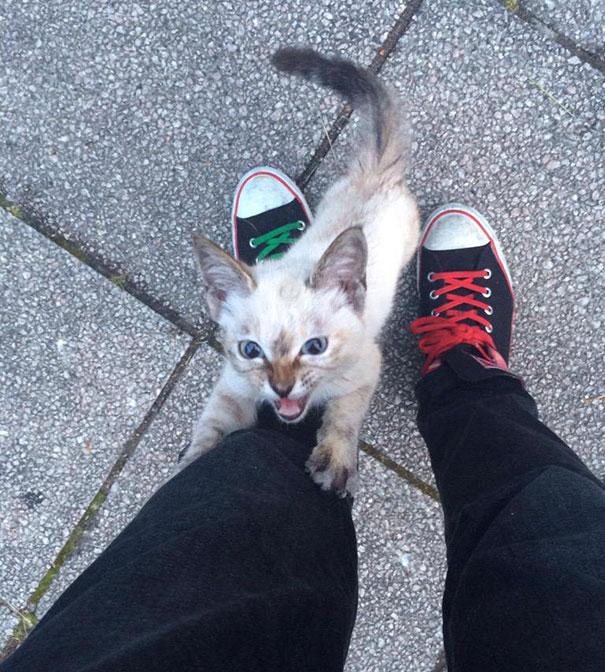 В парке парня остановил котенок и вцепился ему в ноги! У него было очень важное дело