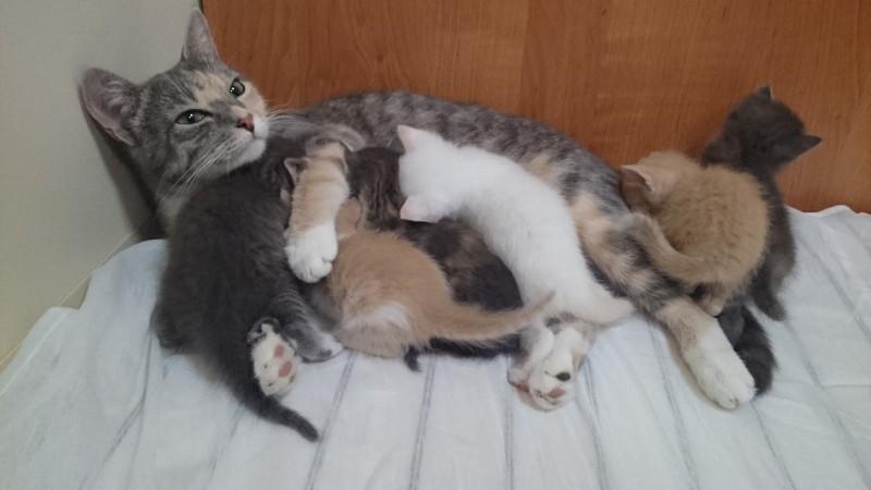 Кошка родила шестерых котят …