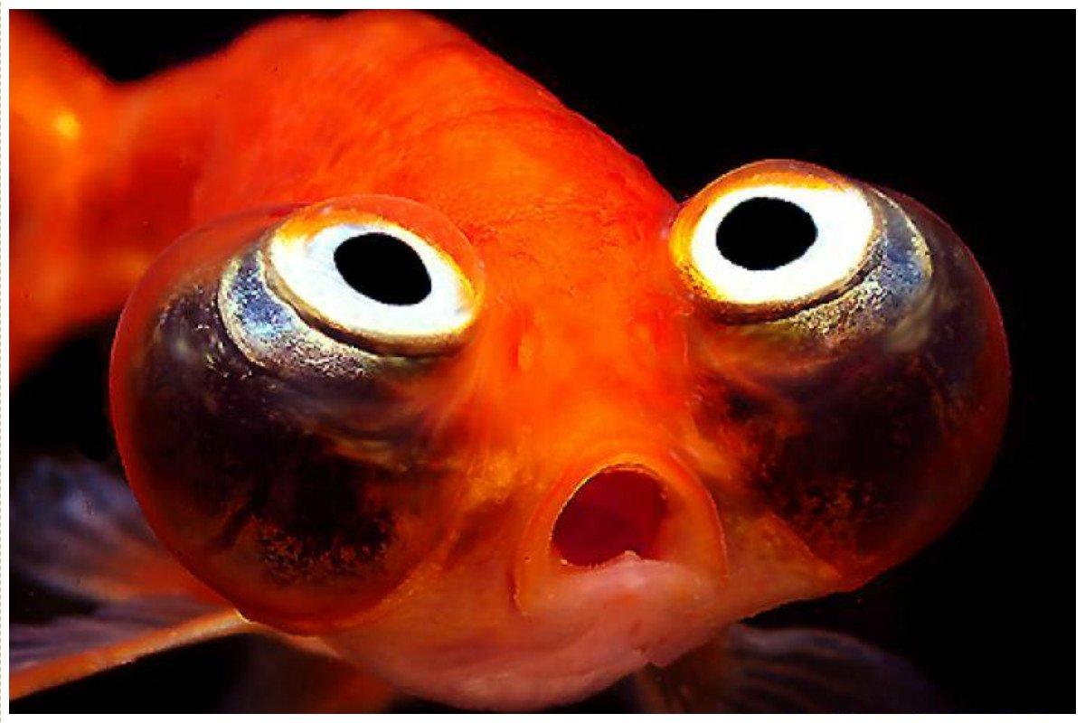 Что такого, нетривиального, вы бы попросили у золотой рыбки? желания, жизнь, запросы, золотая рыбка, интересное, мечты, нетривиально