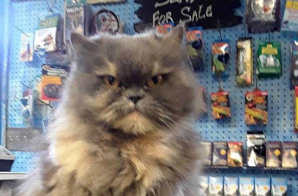 Похититель вернул кота в зоомагазин