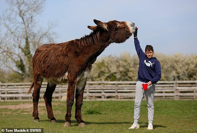 Осёл по имени Деррик собирается стать самым огромным ослом в мире