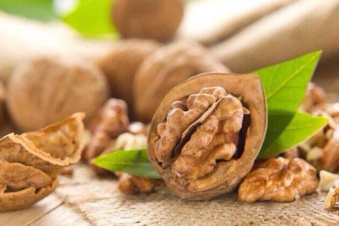 Грецкий орех — польза и вред для здоровья
