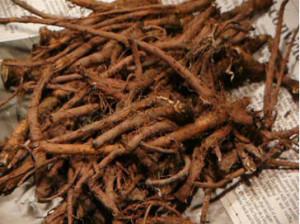 Промытые корни одуванчика