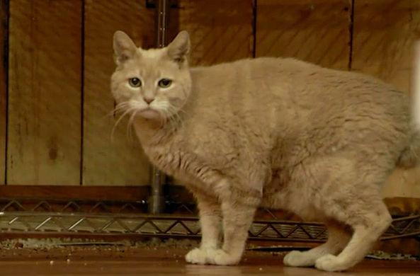 Аляска оплакивает кота, который прослужил мэром 20 лет