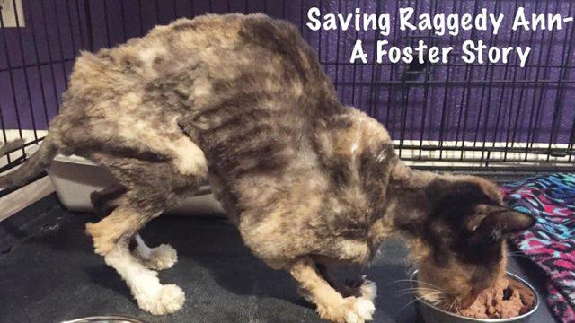 Спасенная кошка в свои 14 ле…