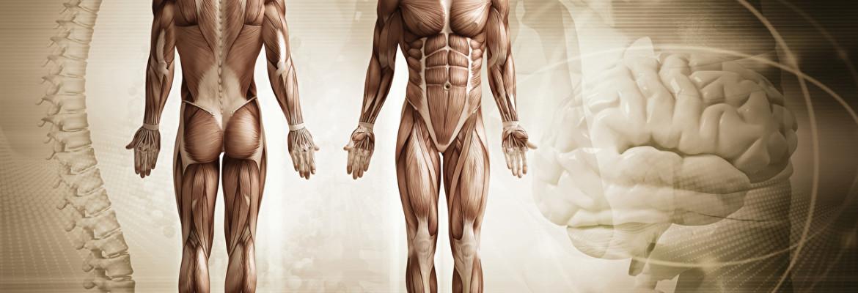 20 интересных фактов о человеческом организме
